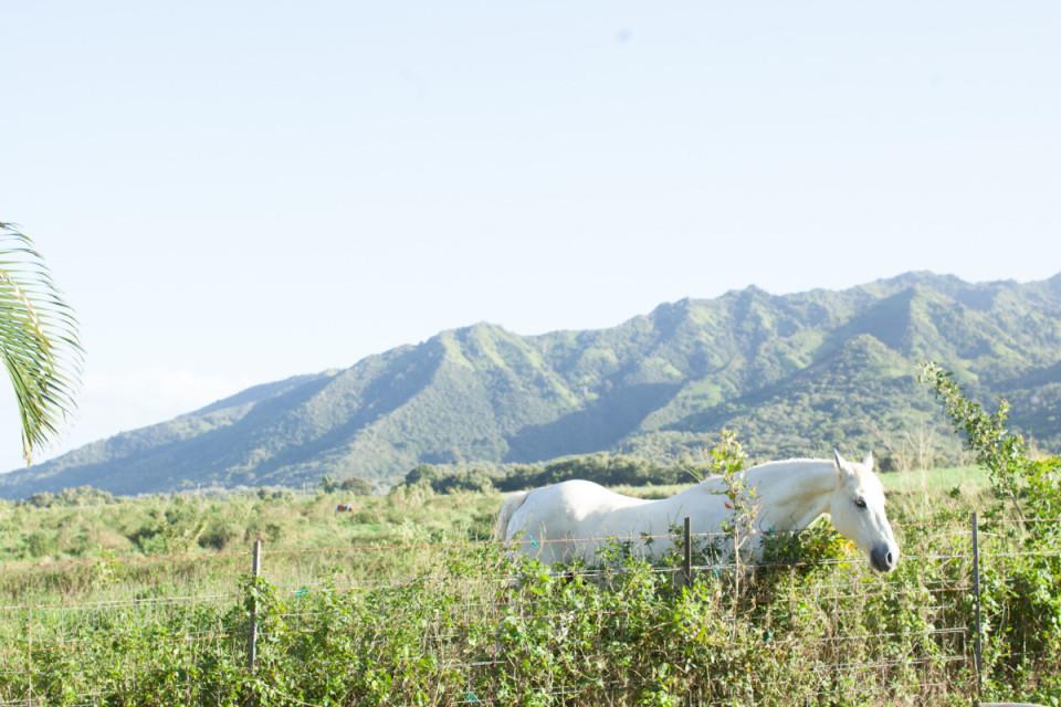 where to stay in kauai, hawaii, the cliffs at princeville, koa kea resort, airbnb, kapuna hale, travel